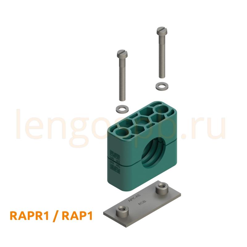 RAPR1 RAP1