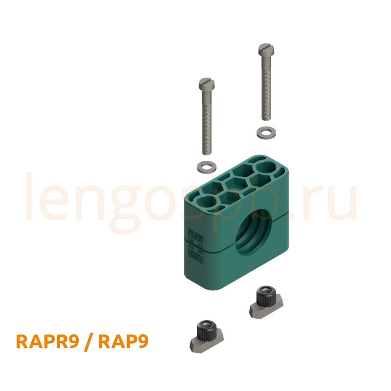 RAPR9 RAP9